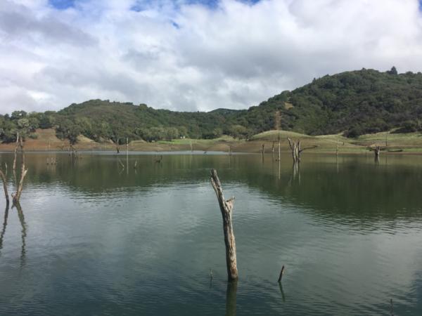 lake-sonoma-wood