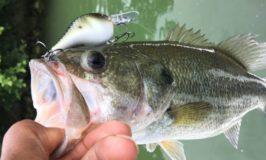 Lake Ray Hubbard Fishing Report by Darrel Thomas