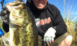 Delta Fishing Report-Sick for it Guide Service