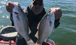 Norfork Lake Fishing Report by Jeff Jewell